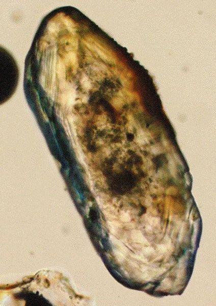 Кристалл циркона под микроскопом
