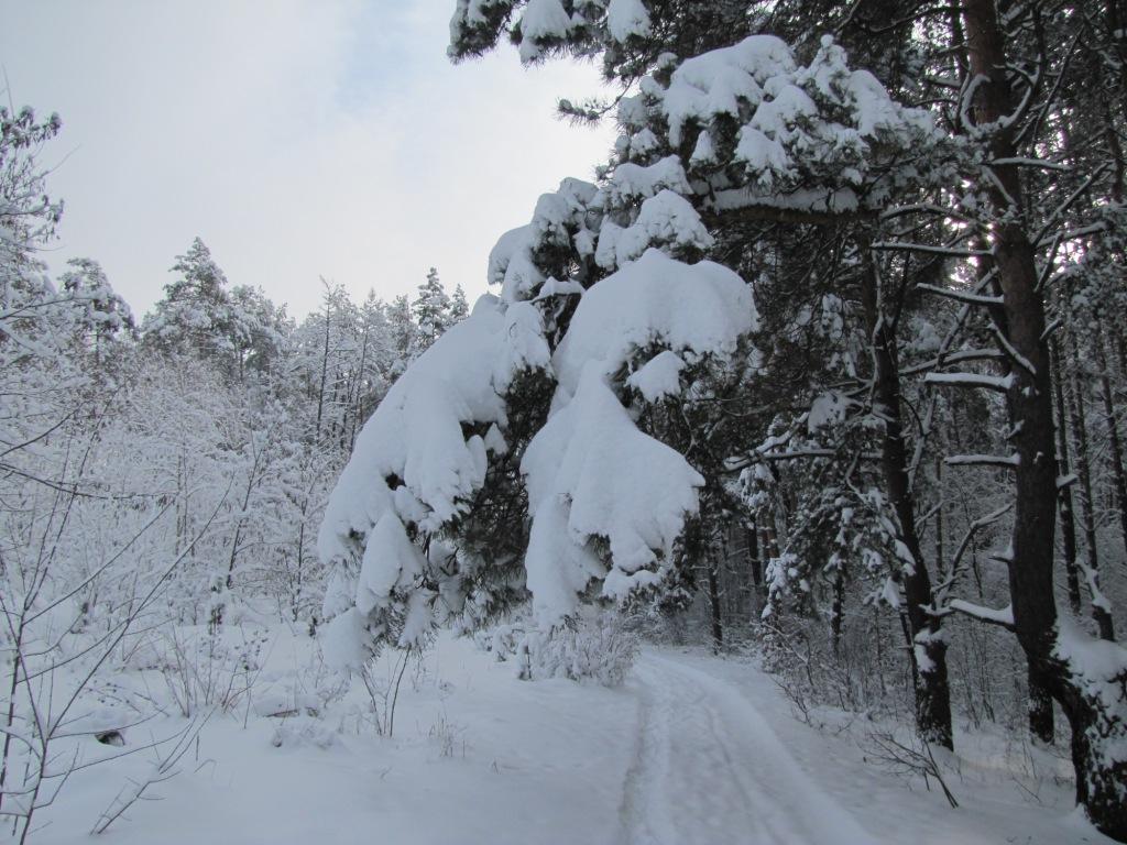 Зимний лес (фотографии)