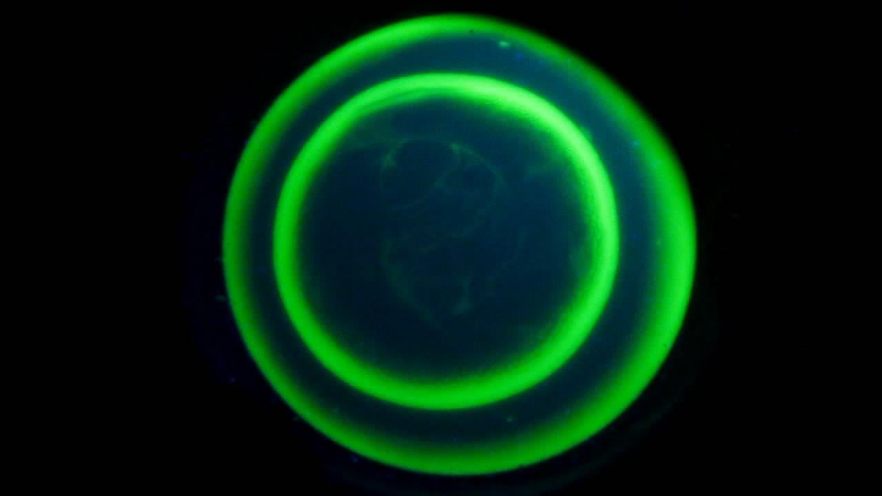 The Fluorescence of Fluorescein under UV Light on the Surface of Milk. (Surface Tension Experiments). Свечение флуоресцеина на поверхности молока и жидкое мыло. (Эксперименты с поверхностным натяжением)