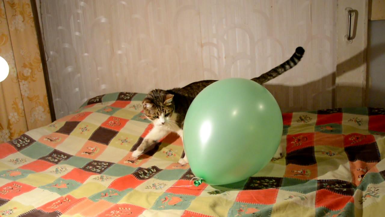 Hexane Destroys Rubber (balloon, hexane and cat). Гексан разрушает резину (воздушный шарик, гексан и кошка)