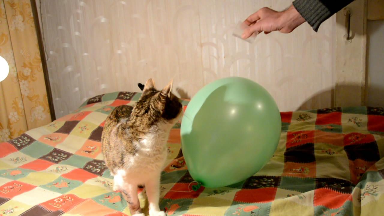 Гексан разрушает резину (воздушный шарик, гексан и кошка). Hexane Destroys Rubber (balloon, hexane and cat)