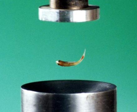 Левитирующая рыбка (магнитное поле)