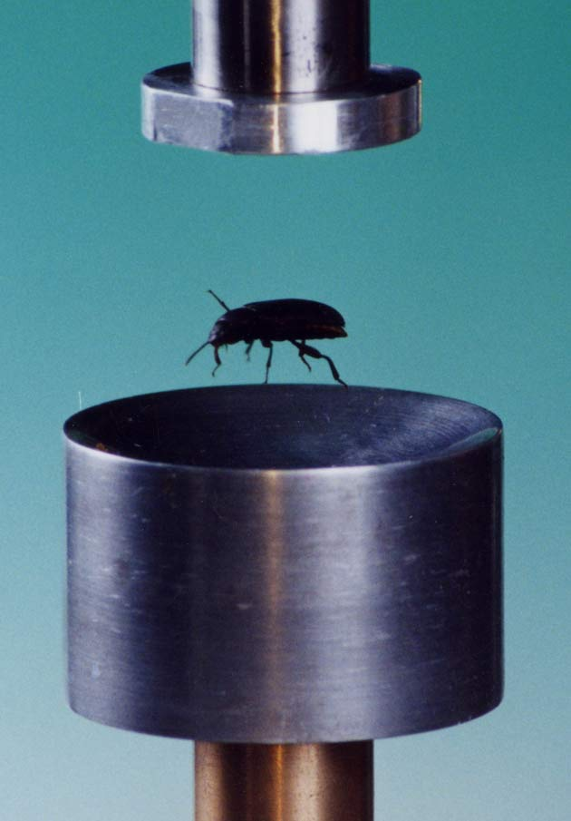 Левитирующий  жук (магнитное поле)
