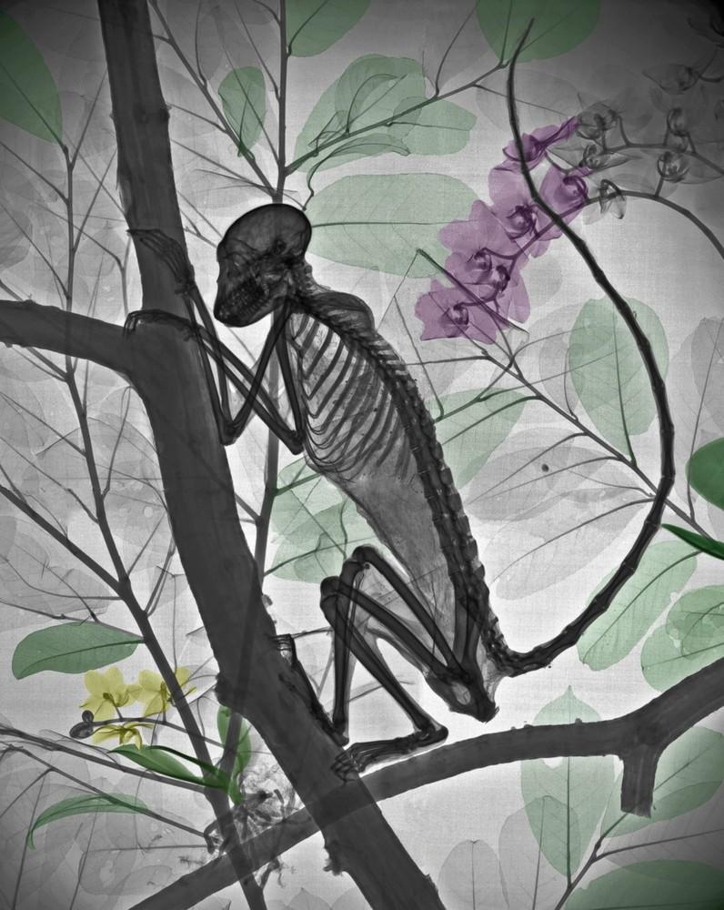Раскрашенные рентгеновские снимки