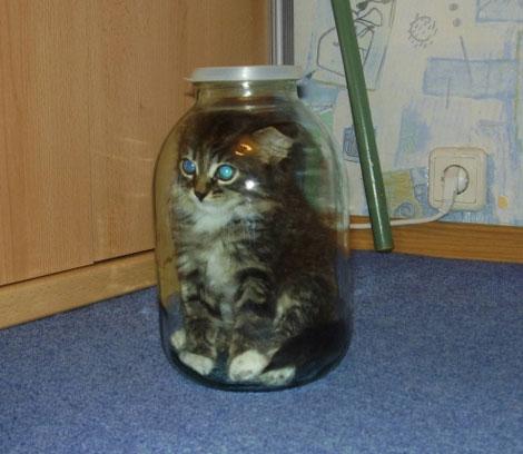 Кот в банке