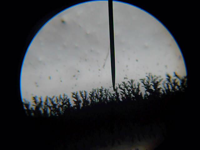 Рост кристаллов серебра под микроскопом (рост дендритов серебра). The growth of silver crystals (silver dendrite growth). Watching under a microscope