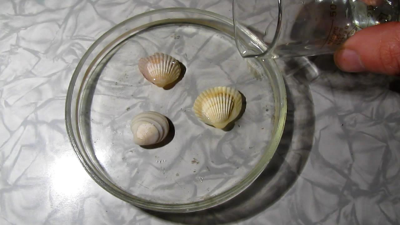 Растворение раковин моллюсков в азотной кислоте. Dissolution of mollusk shells in nitric acid