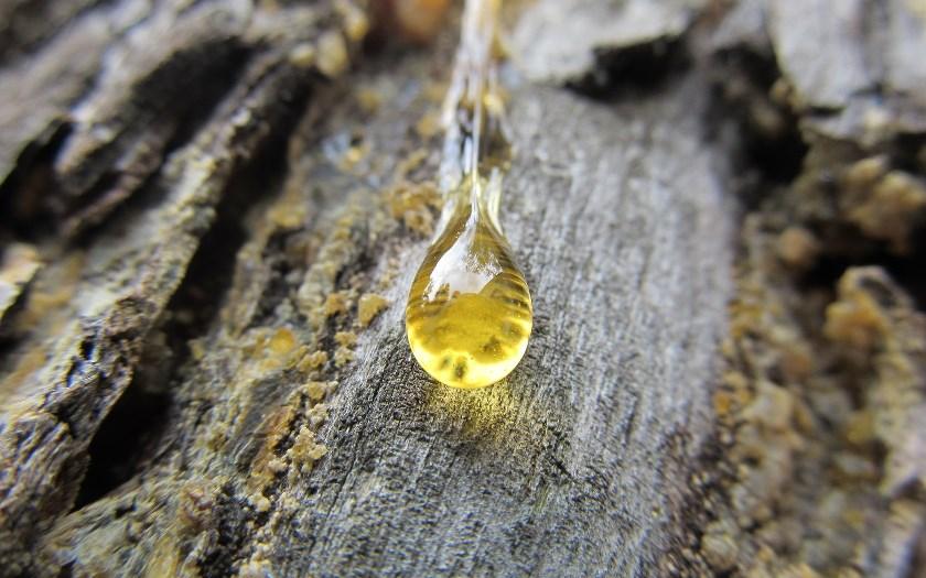 Живица (хвойная смола). Galipot (pine resin)