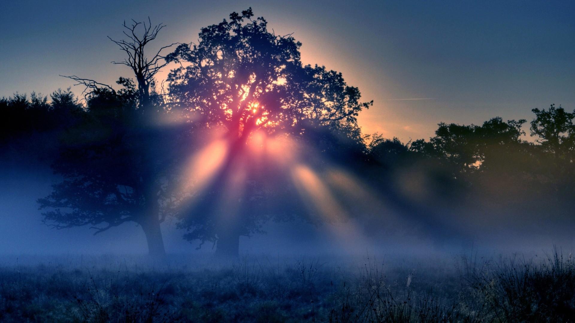 Солнечные лучи. Rays of the Sun in the fog