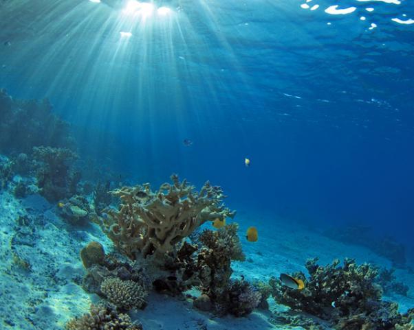 Солнечные лучи под водой. Rays of the Sun under water