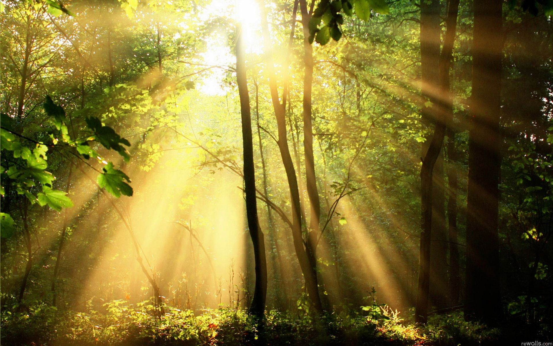 Солнечные лучи. Rays of the Sun