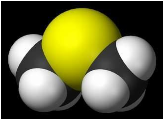 Диметилсульфид. Dimethyl sulfide (DMS) or methylthiomethane