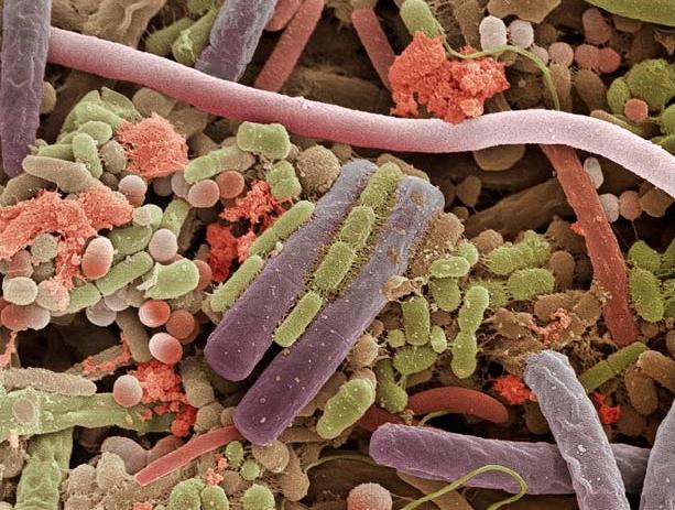 Бактерии на поверхности человеческого языка