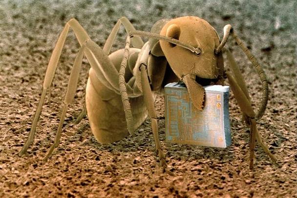 Муравей, который держит микрочип