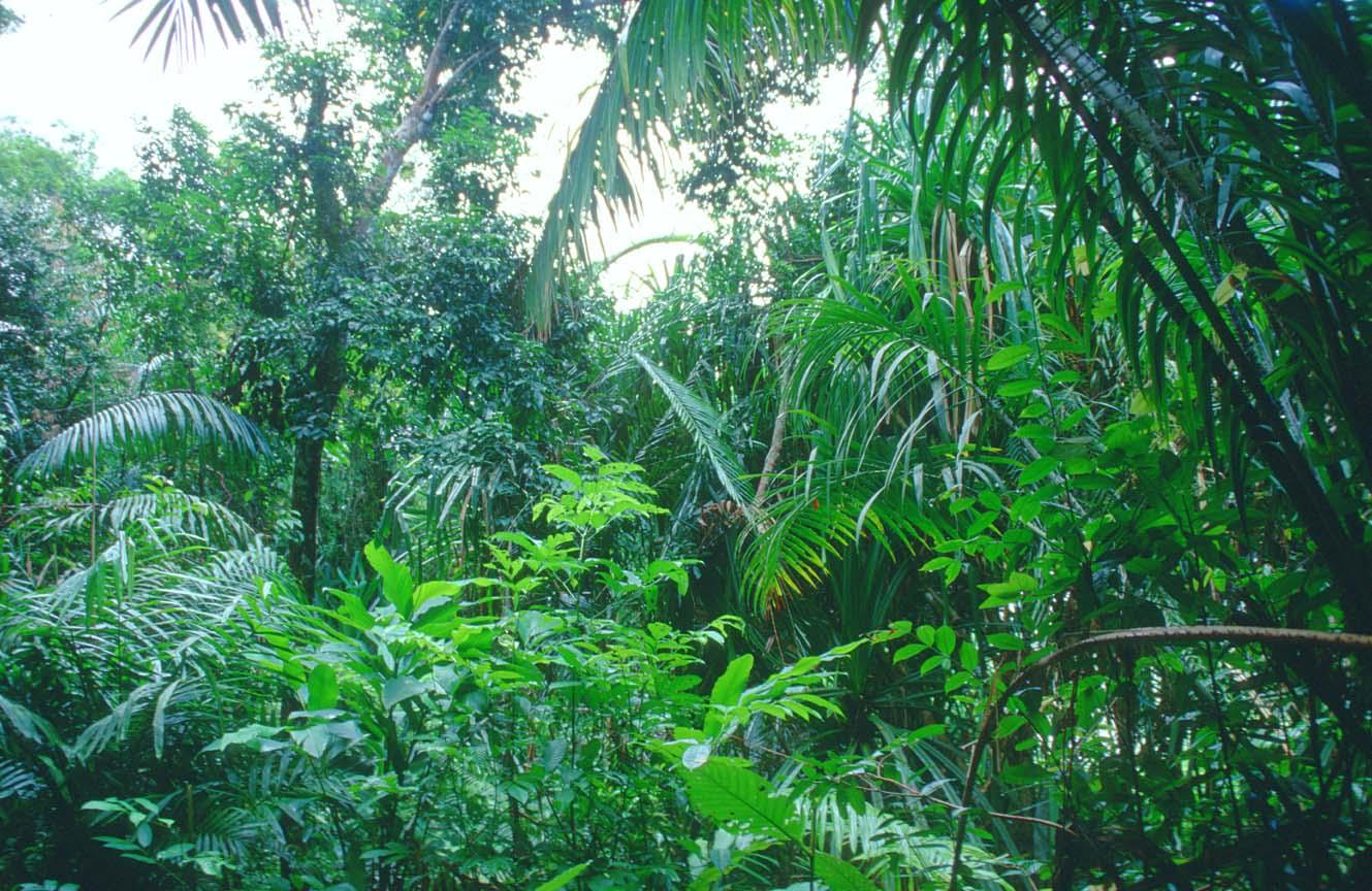 Тропический лес - зеленые легкие планеты
