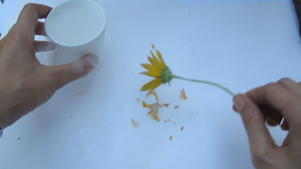 Хрупкость растений (жидкий азот)