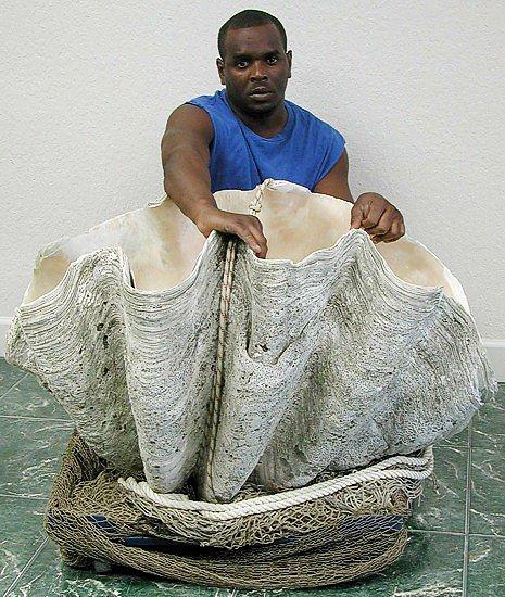 Гигантский моллюск