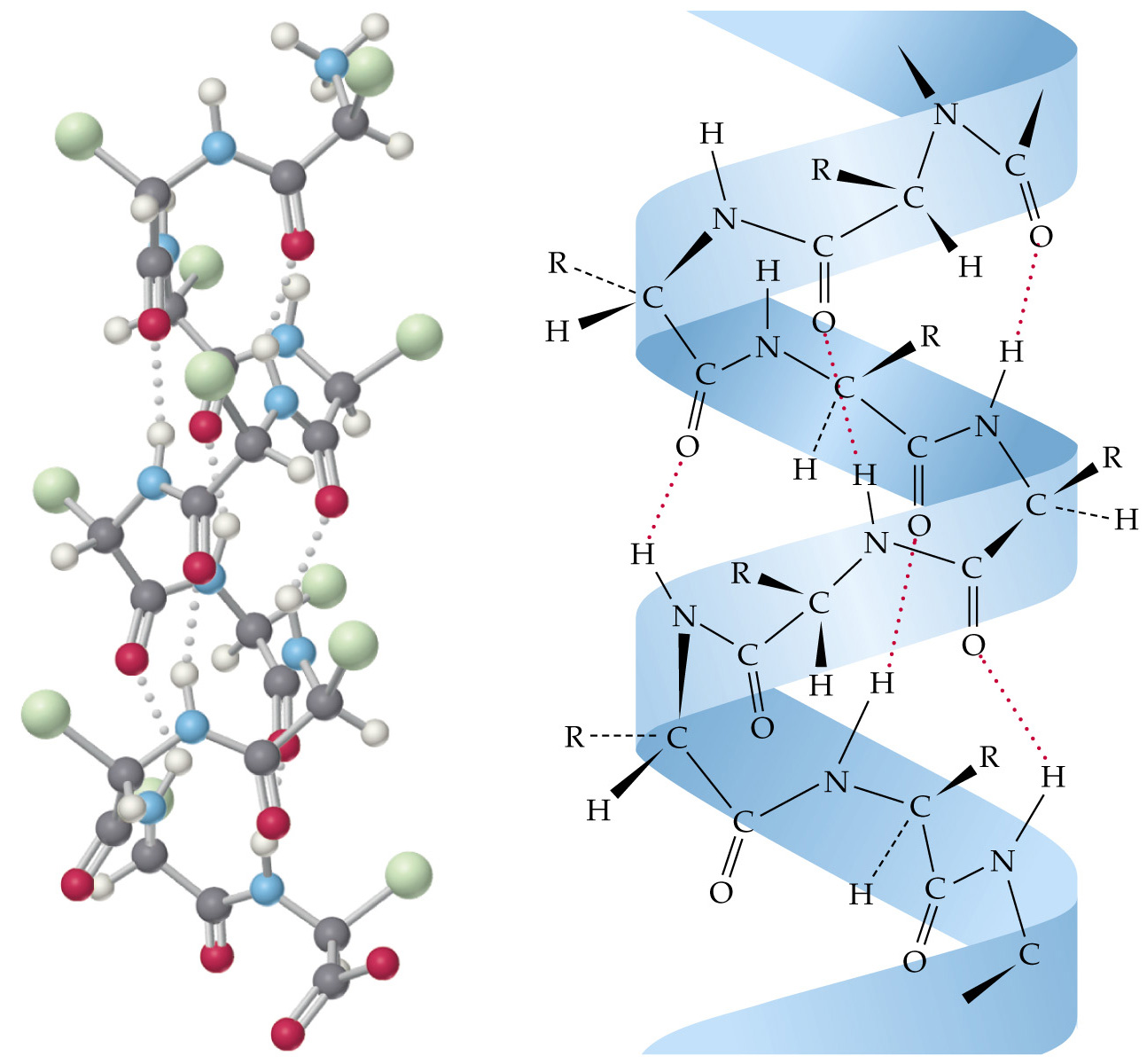 Молекула кератина