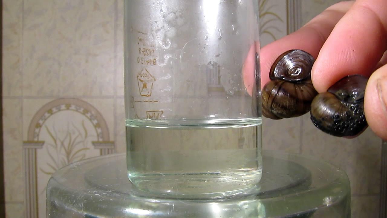 Раковины моллюсков и концентрированная соляная кислота. Mollusk shells and concentrated hydrochloric acid