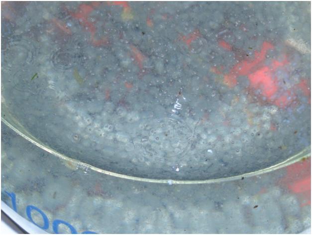 Получение металлического цинка из водного раствора. The precipitation of metallic zinc from an aqueous solution