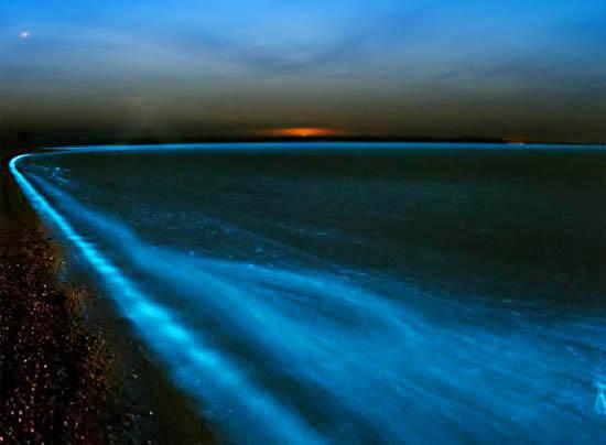Свечение моря
