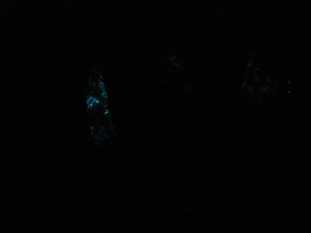 Светящиеся бактерии