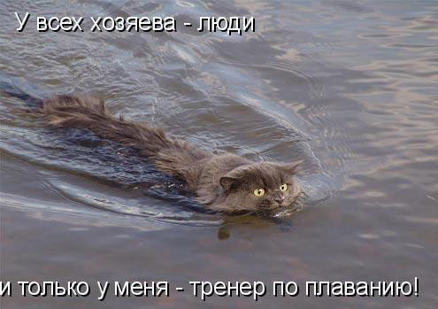 Научный юмор - кошки