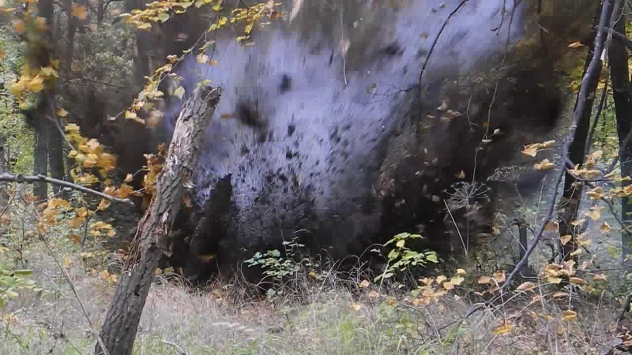 Сравнение карбамидного динамона и аммотропина
