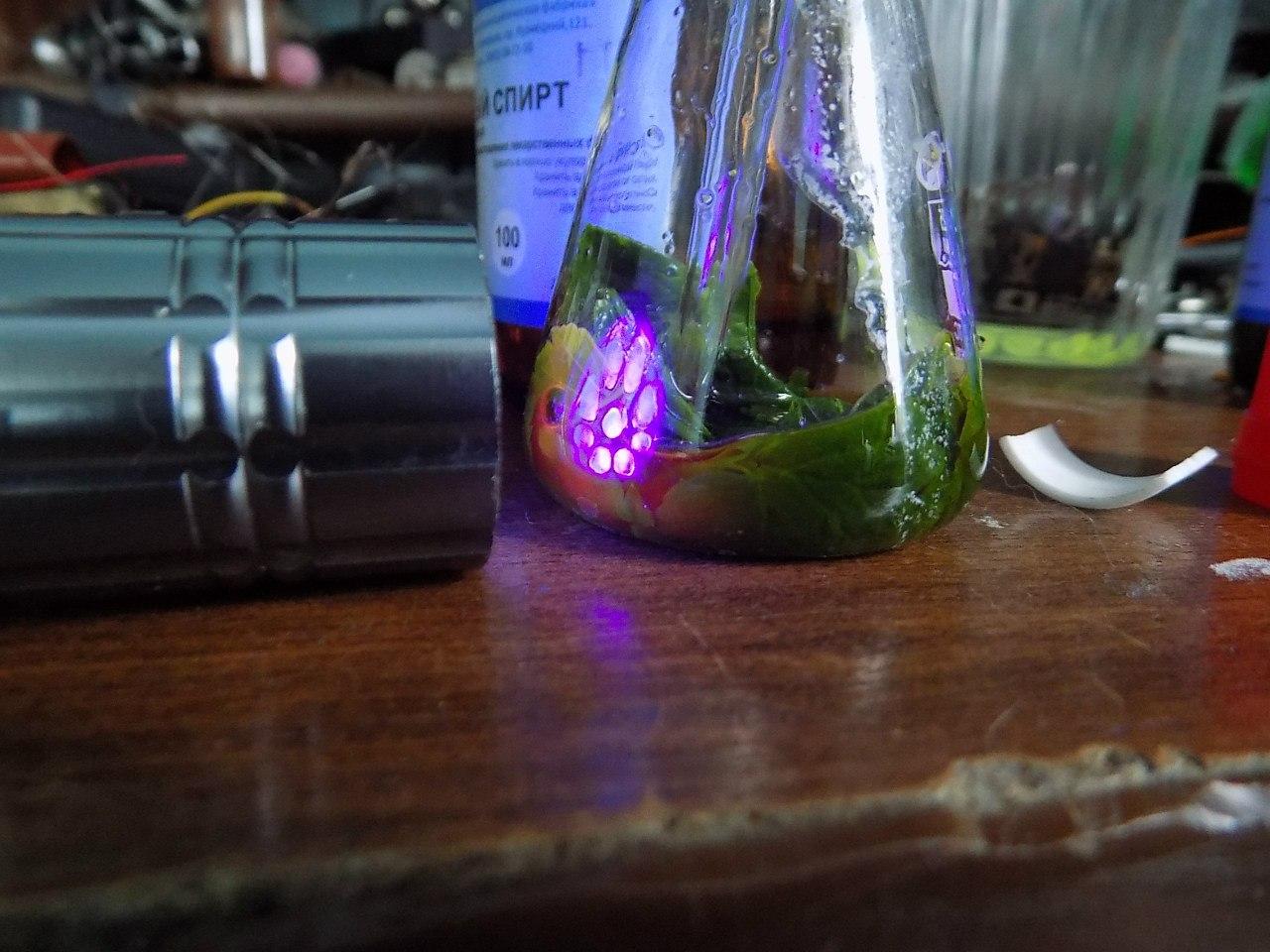 Люминесценция хлорофилла в ультрафиолетовом свете