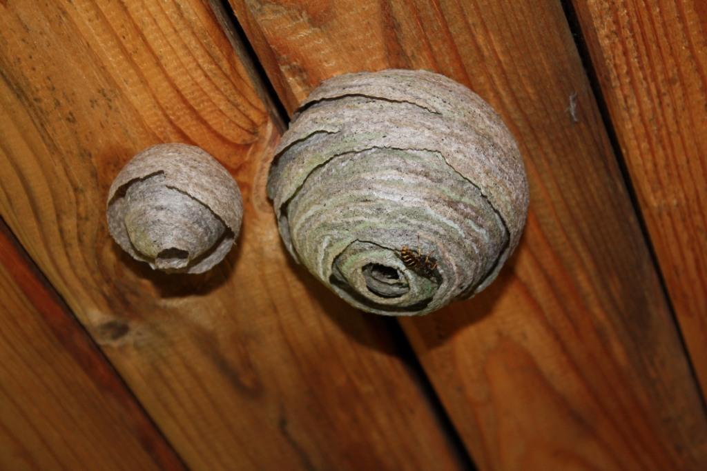 Бумажные осы