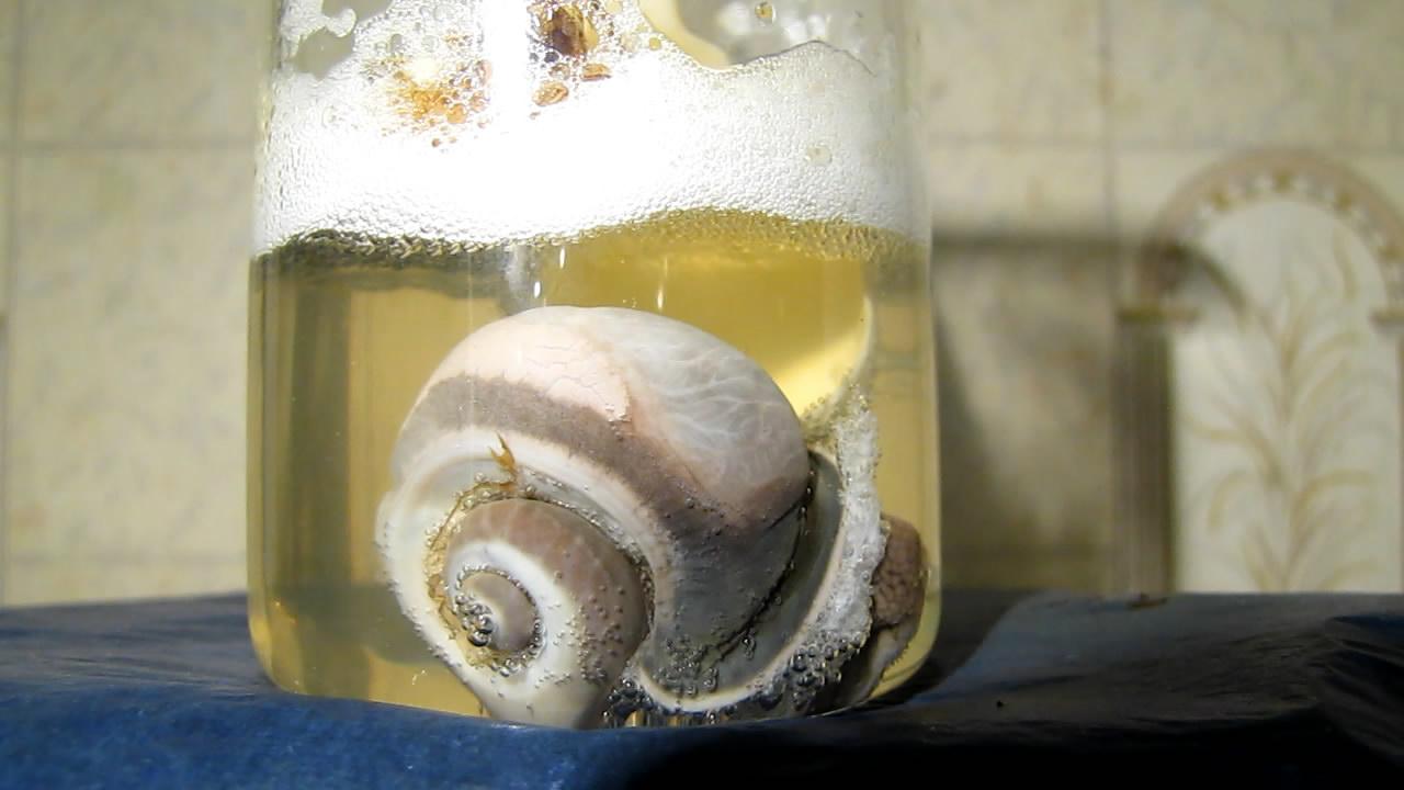 Улитка и азотная кислота. Snail and nitric acid