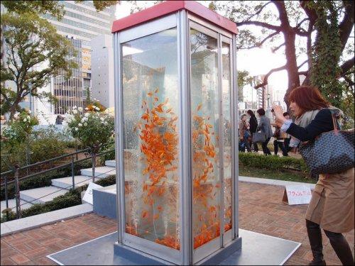 Золотые рыбки в телефонных будках (Япония). Goldfish phone boot aquariums (phone booths turned into aquariums with goldfish)