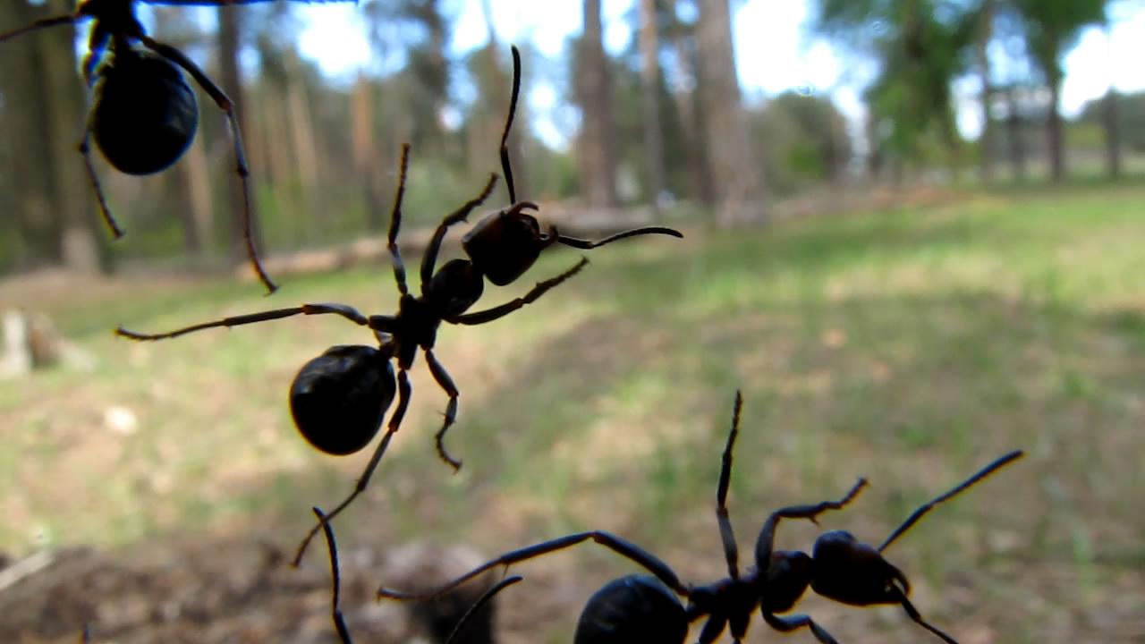 Муравьи на объективе фотоаппарата. Ants on camera lens
