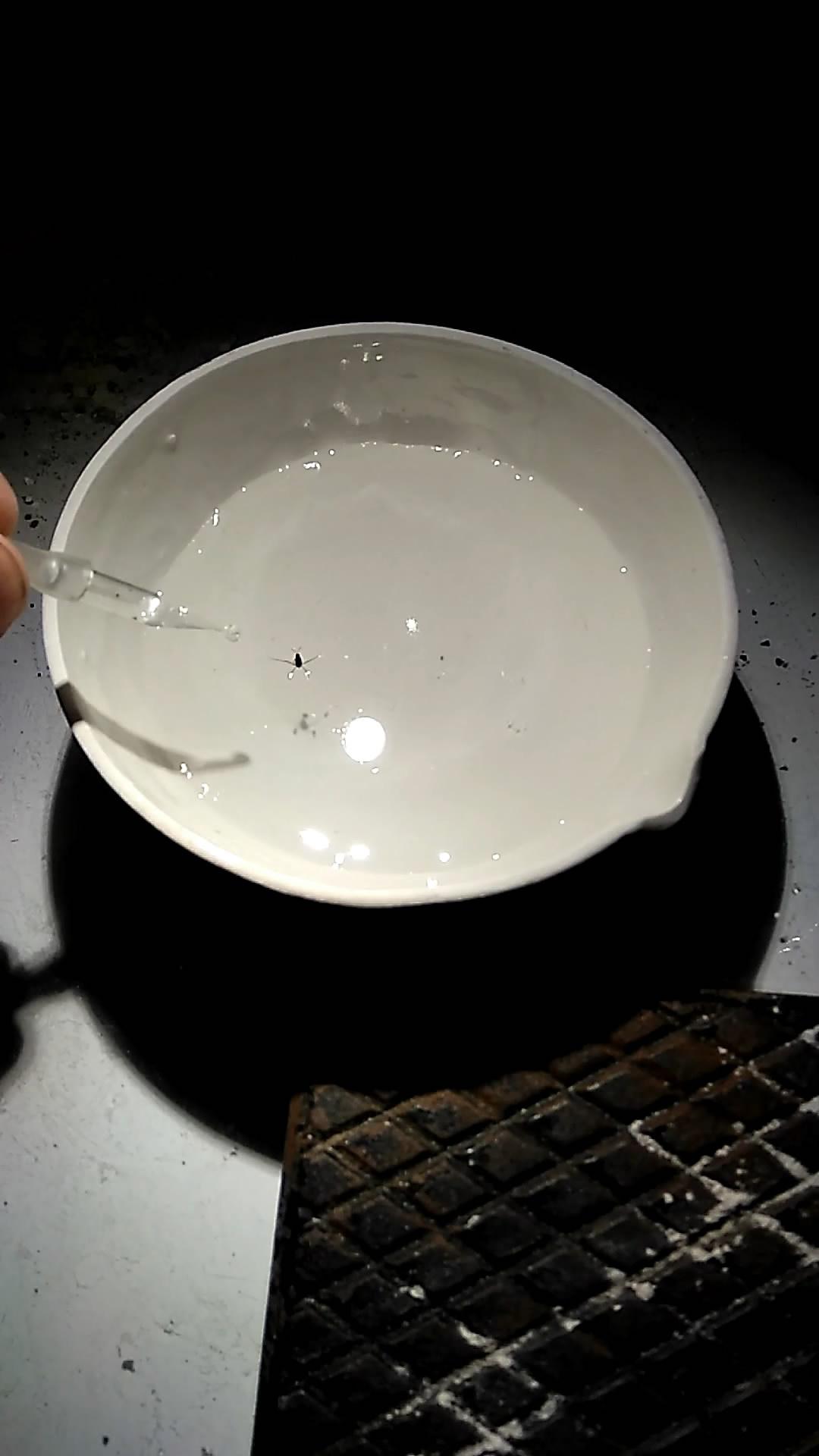 Водомерка и поверхностно-активные вещества. Gerridae and surfactants