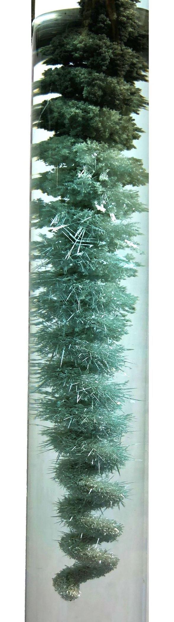 Серебряное дерево. Silver tree