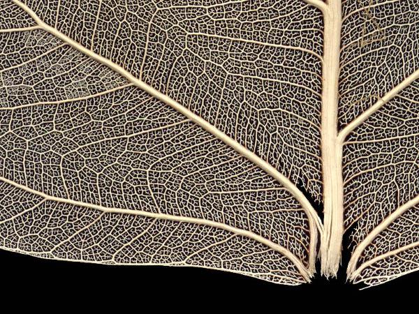 Фрагмент листа растения