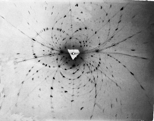 Рентгенограмма кристалла, полученная методом Лауэ (лауэграмма)