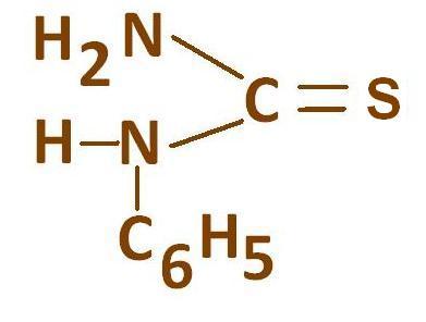 N-фенилтиомочевина