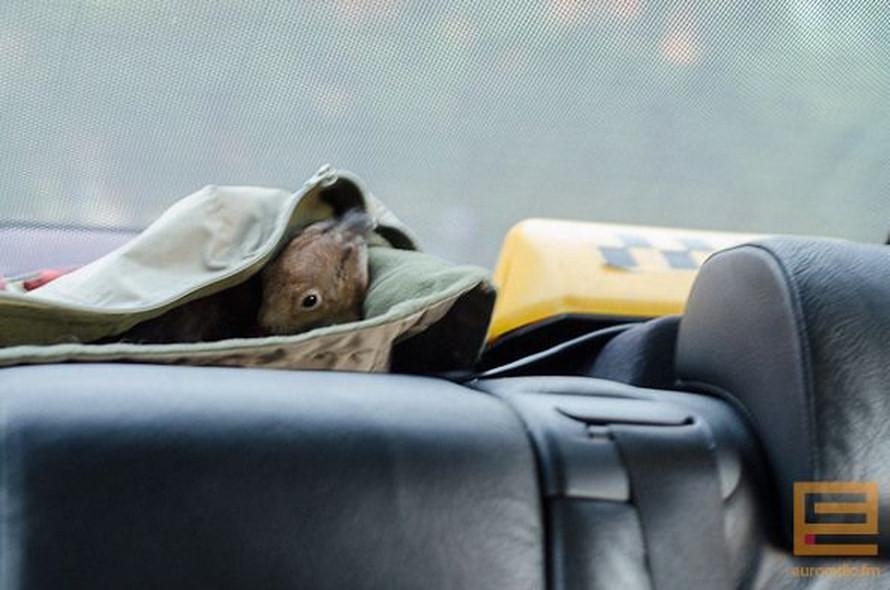 Белка в такси