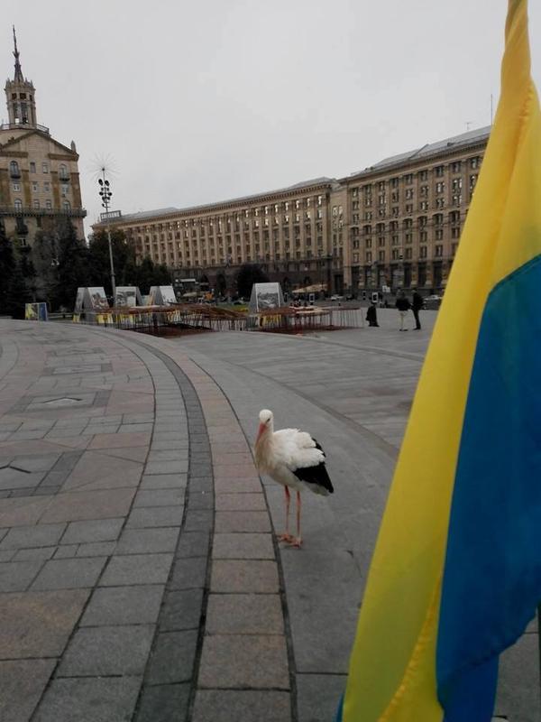 Аист - Киев, Майдан Независимости