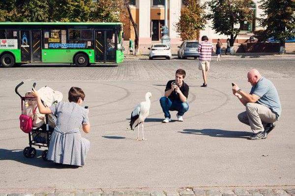 На харьковскую площадь Свободы снова прилетели аисты