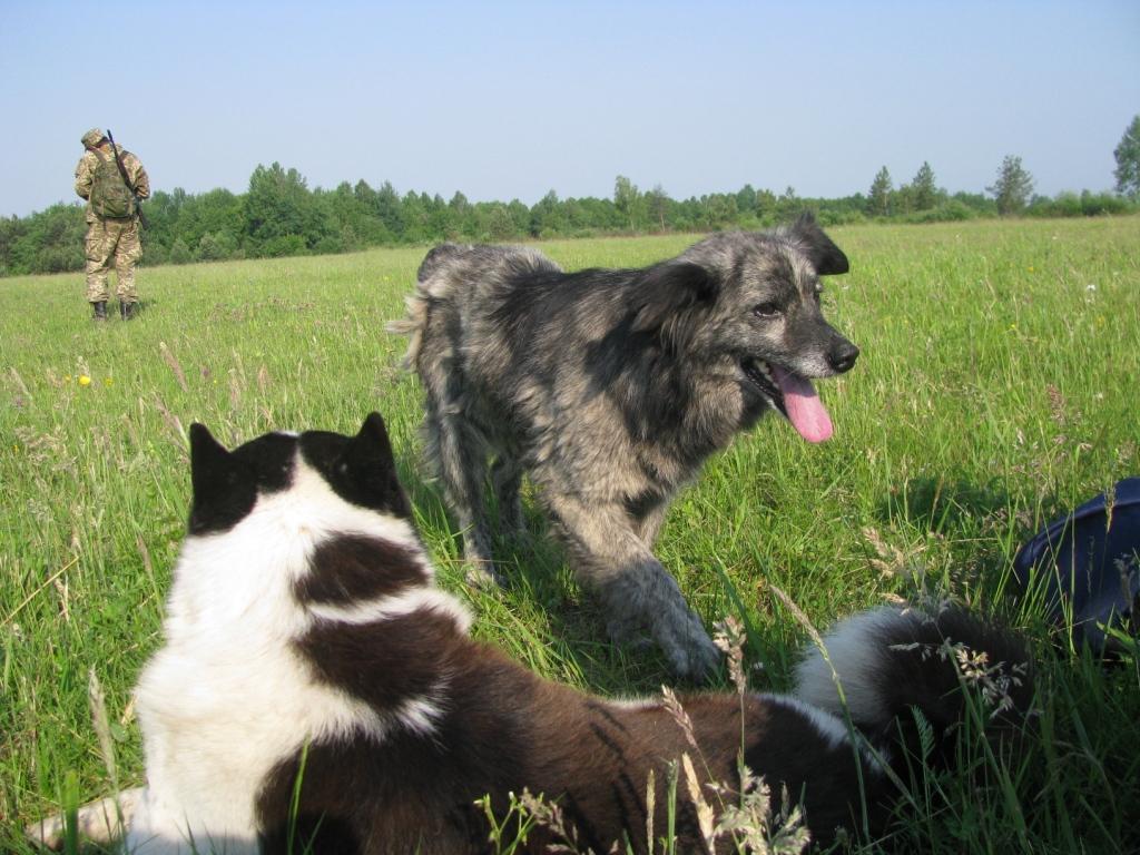 Саперы и собаки