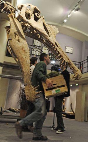 Скелеты динозавров