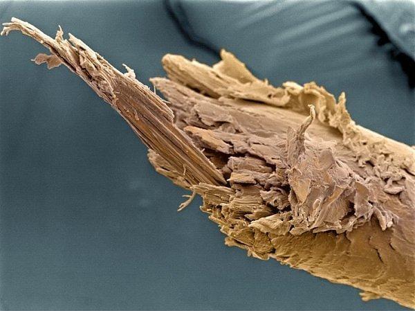 Расщепленный кончик человеческого волоса