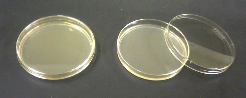 Питательная среда на основе агар-агара в чашке Петри