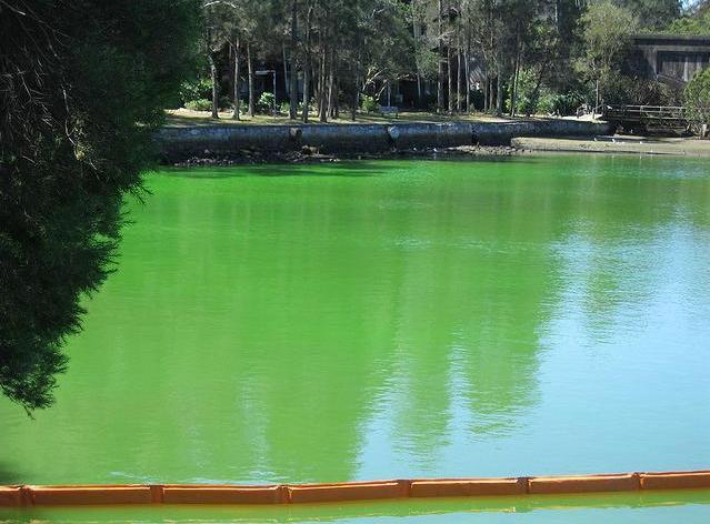 Бассейн, окрашенный флуоресцеином