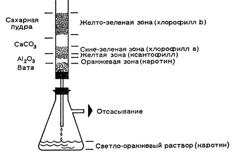 Хроматография хлорофилла