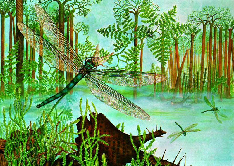 Стрекоза меганевра (Meganeura) - грозный хищник каменноугольного периода