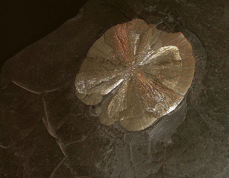 Доллар из пирита (кружок из пирита, который напоминает золотую монету)