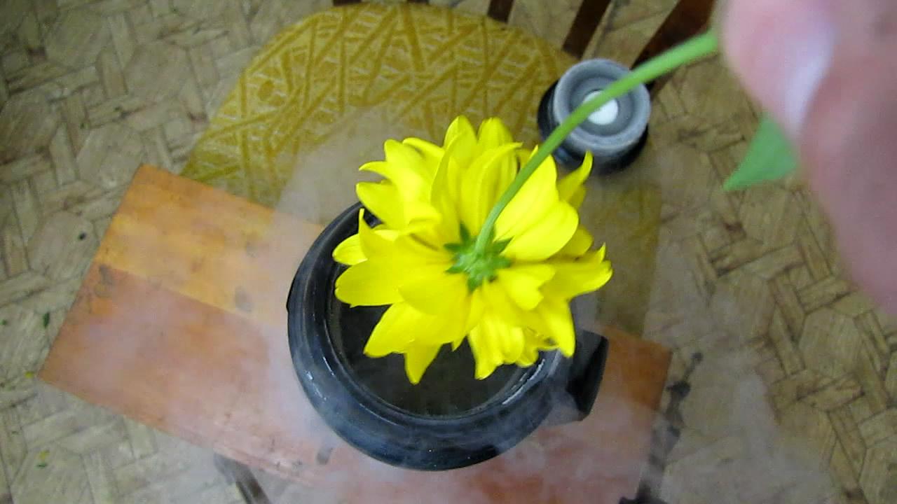 Разбивание цветов (жидкий азот)
